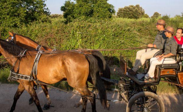 Actividades en Logroño con caballos para disfrutar entre viñas